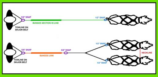 Dog Harness Diagram, Dog, Get Free Image About Wiring Diagram